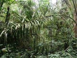 Bwindi Impenetrable National Park (3)